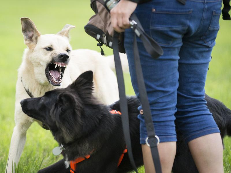 Ordnungsamt Aggressiver Hund